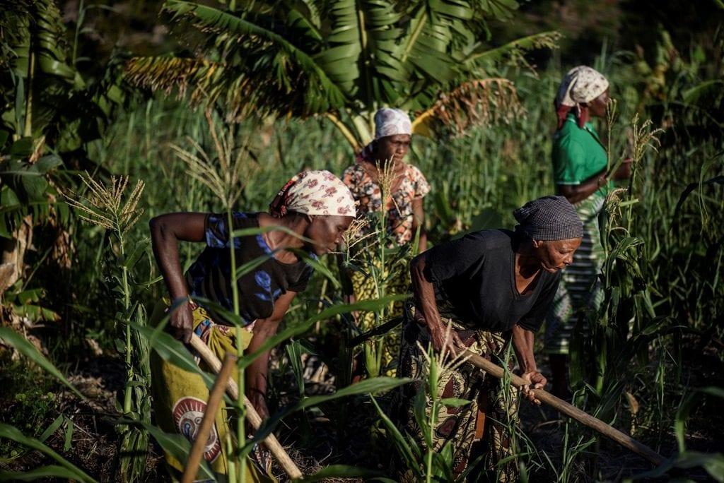 ActionAid steunt wereldwijd boerinnen in hun strijd voor landrechten, zoals hier in Mozambique.
