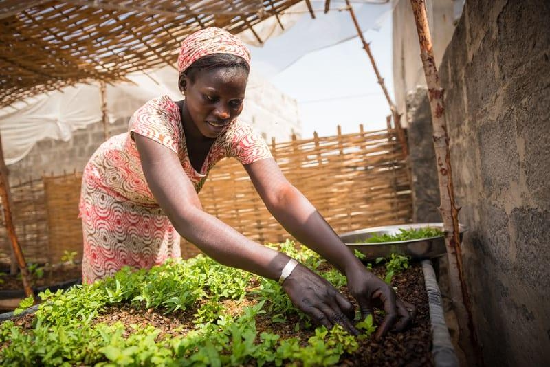 Amie Diouf Agro-ecologie Senegal
